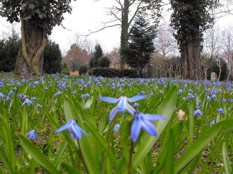 Friedhof ansichten pflanzen for Pflanzen berlin